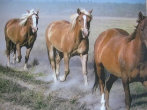 Horseback Riding Vacation at Sunriver, Oregon