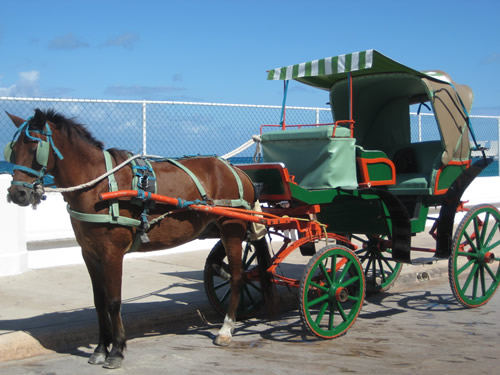 Horseback Riding Vacation in Cozumel, Mexico