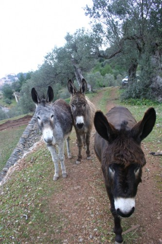 Not your typical horseback riding vacation in Mallorca, Spain