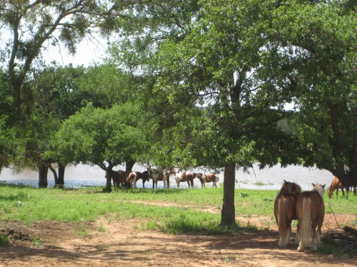 Relaxing Lakeside Before a Horseback Riding Vacation at Wildcatter Ranch in Graham, Texas