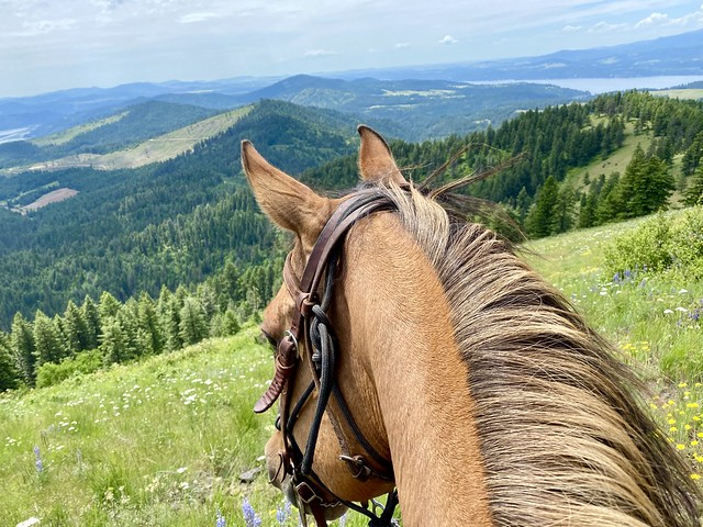 Looking out to the forest floor, from my horses' perspective, in Harrison, Idaho during a horse riding vacation with Red Horse Mountain Ranch.