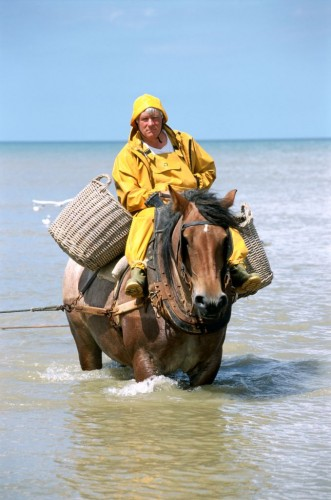 Horseback Shrimp Fishing - No Horseback Riding Vacation in Belgium