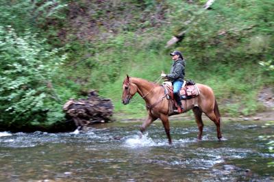 Horseback riding vacation through the California redwoods with Coastal Horseback Riding Adventures