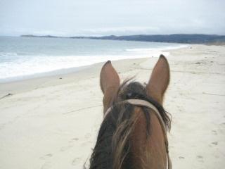 Horseback Riding Vacation In Half Moon Bay California On Poplar Beach