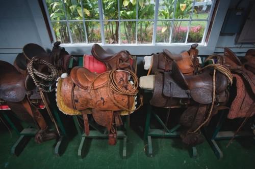 Many of the Saddles on display for a horseback riding vacation at Anna Ranch