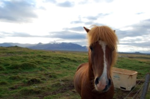 Have you been on a horseback riding vacation in Iceland? I'm ready!