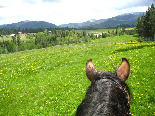 Join Travel Writer Nancy D. Brown on a horseback riding vacation at Echo Valley Ranch