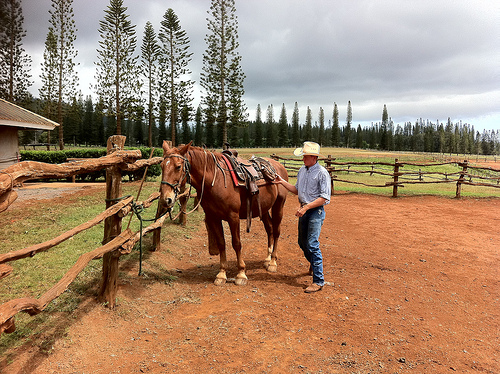 Jessie Taylor saddles Dusty for a horseback riding vacation at Koele Stables in Lanai, Hawaii