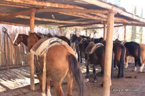Horses at Argentina Rafting expediciones await your horseback riding vacation