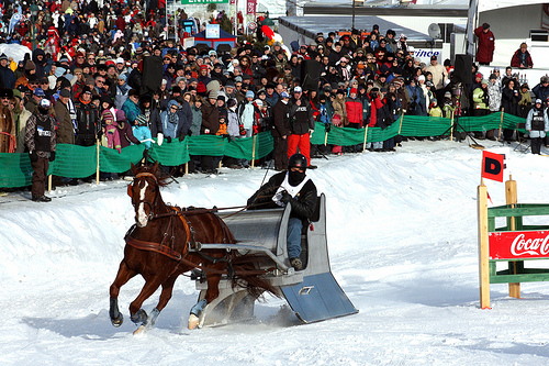 St-Hubert Single Sleigh Race