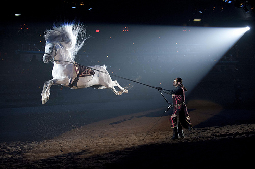 Andalusian horses perform in the shows as they did in the military during the medieval ages.