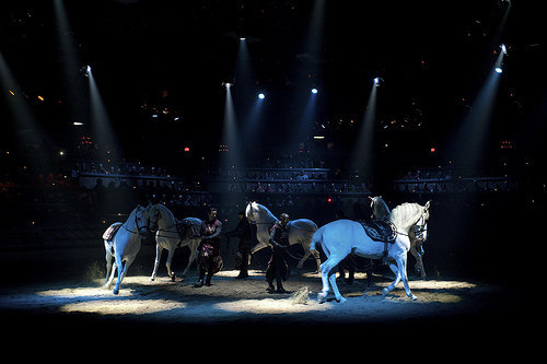 Some of the most talented Medieval Times cast members are the horses.