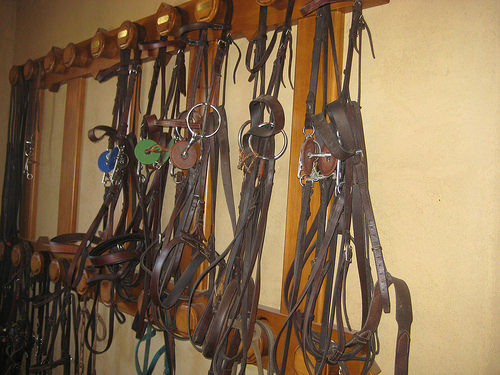 bridle, tack room, leather, horse bridle, wine country trail rides, healdsburg, california