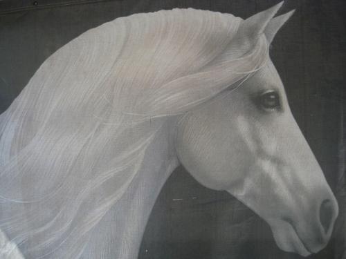 cavalia magic, cavalia horse