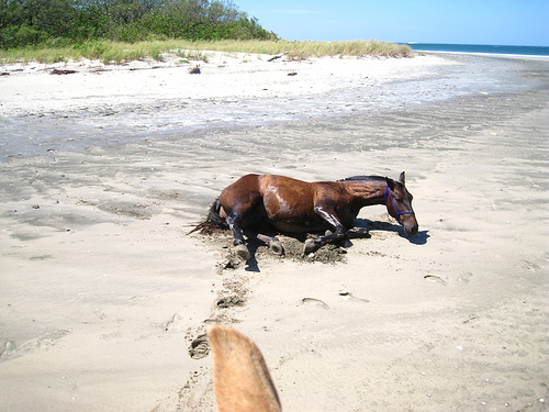 This Crillo horse served as an emergency back up on this horseback riding vacation