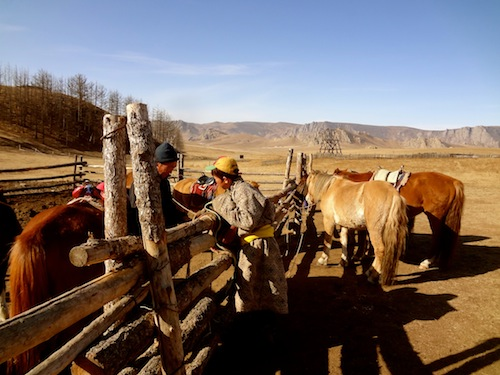 Preparing for our horseback ride to Turtle Rock in Mongolia