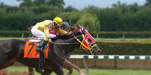 Horse race betting basics: What's the horses running style and track record?
