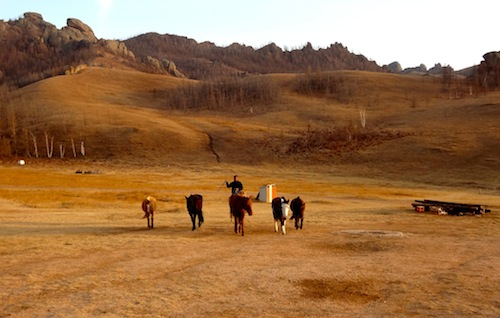 Rounding up horses during a horseback riding vacation in Mongolia