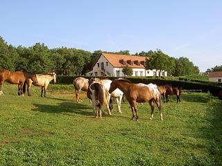 Horseback riding vacation at Domaine des Garennes in France