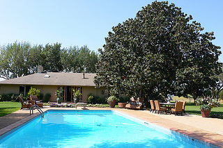 Pool and Guest House at Picosa Ranch with the Magnolia Tree.