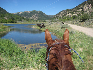 """""""High Lonesome Ranch cattle drive"""""""