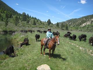 """Nancy Brown cattle drive"""