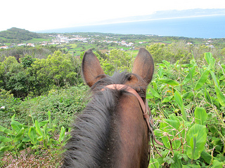 Azores horse Pico Island