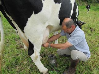 Salomao Oliveria and cow