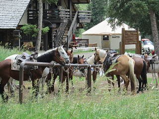 Lone Mountain Ranch horses