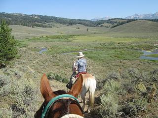 horses, Shoal Creek, Wyoming