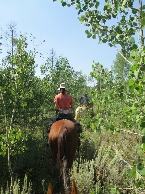 horseback riding bridger teton national forest, sleeping indian outfitters, jackson fork ranch, writing horseback