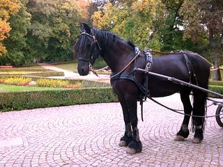 horse carriage, Lubuski, Poland