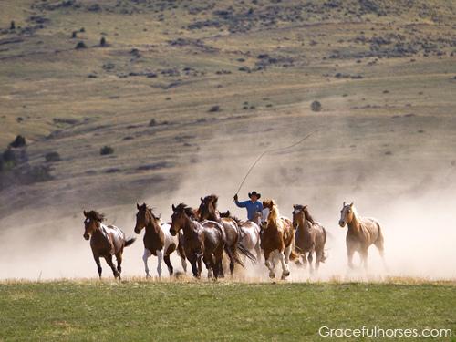 horses, Montana