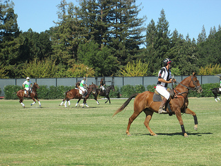 Menlo Polo Club players
