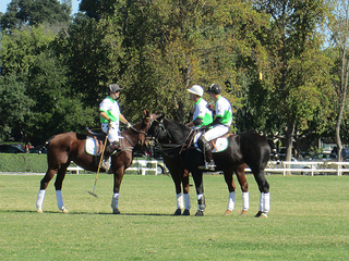 Polo for Lyme players, horses