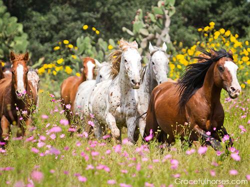 horses, Rancho Las Cascadas, Mexico