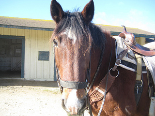 Pebble Beach Equestrian Center horse