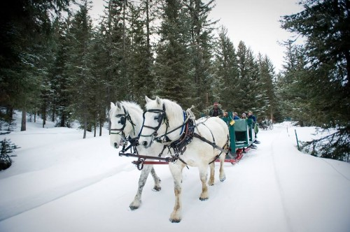 Lone Mountain Ranch sleigh ride