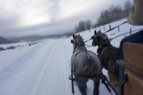 Jackson Fork Ranch horses