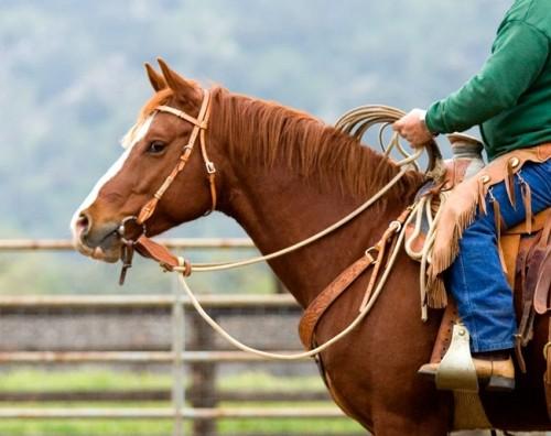 "quarter horse, ""The Loop Ranch"""