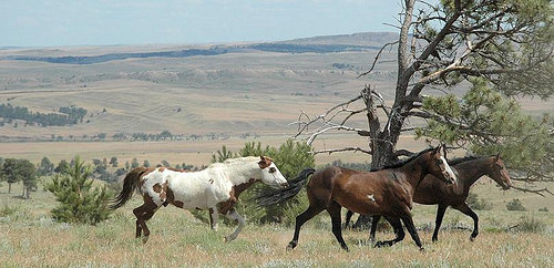 """Black Hills Wild Horse Sanctuary"" South Dakota"