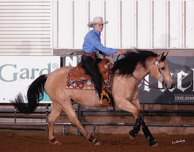 """Polly Cooke"" horse"
