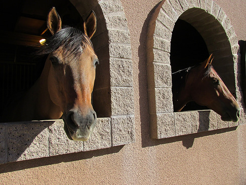 Los Cedros USA, horses, stable, Scottsdale, Arizona