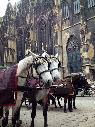 horses, St. Stephens Cathedral, Vienna, Austria