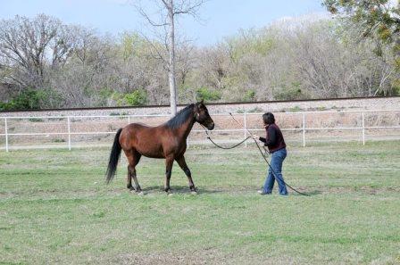 horse, Melinda Folse