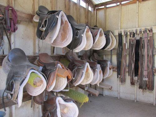saddles, Don E Brook Farms