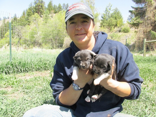 Jessie Royer, Iditarod puppies