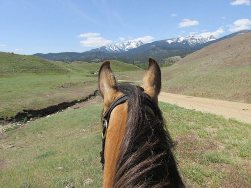 CB Ranch, between the ears, Montana ranch