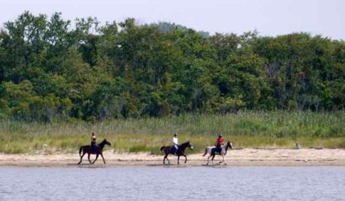 horses, gateway national recreation area, horses