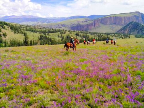 wildflowers, horses, 4ur ranch